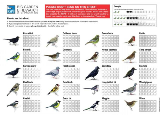 courtesy RSPB http://www.rspb.org.uk/Images/bgbw_sheet_2013_tcm9-325757.pdf